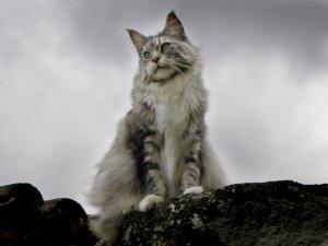 Boomba Cat Epic